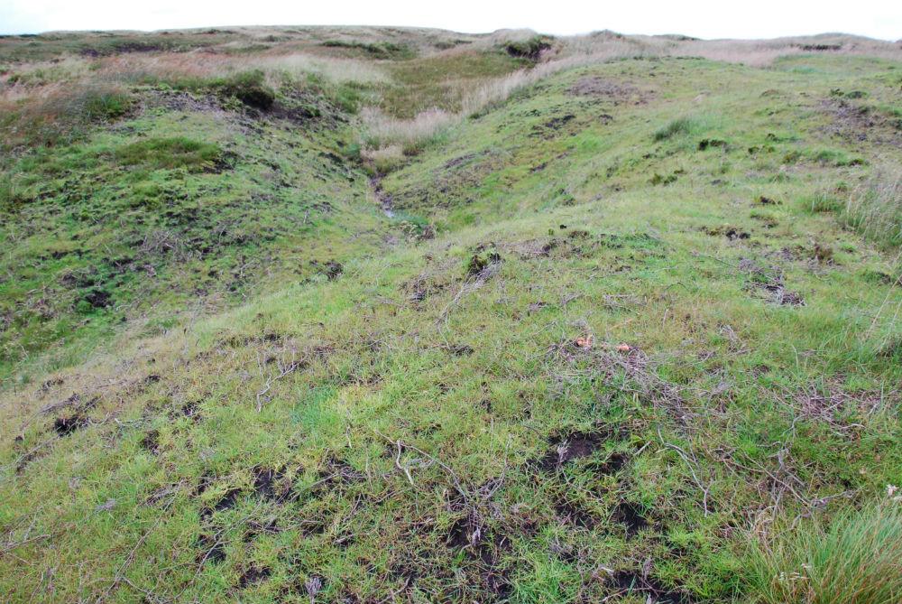 Image of regrowth on Bleaklow