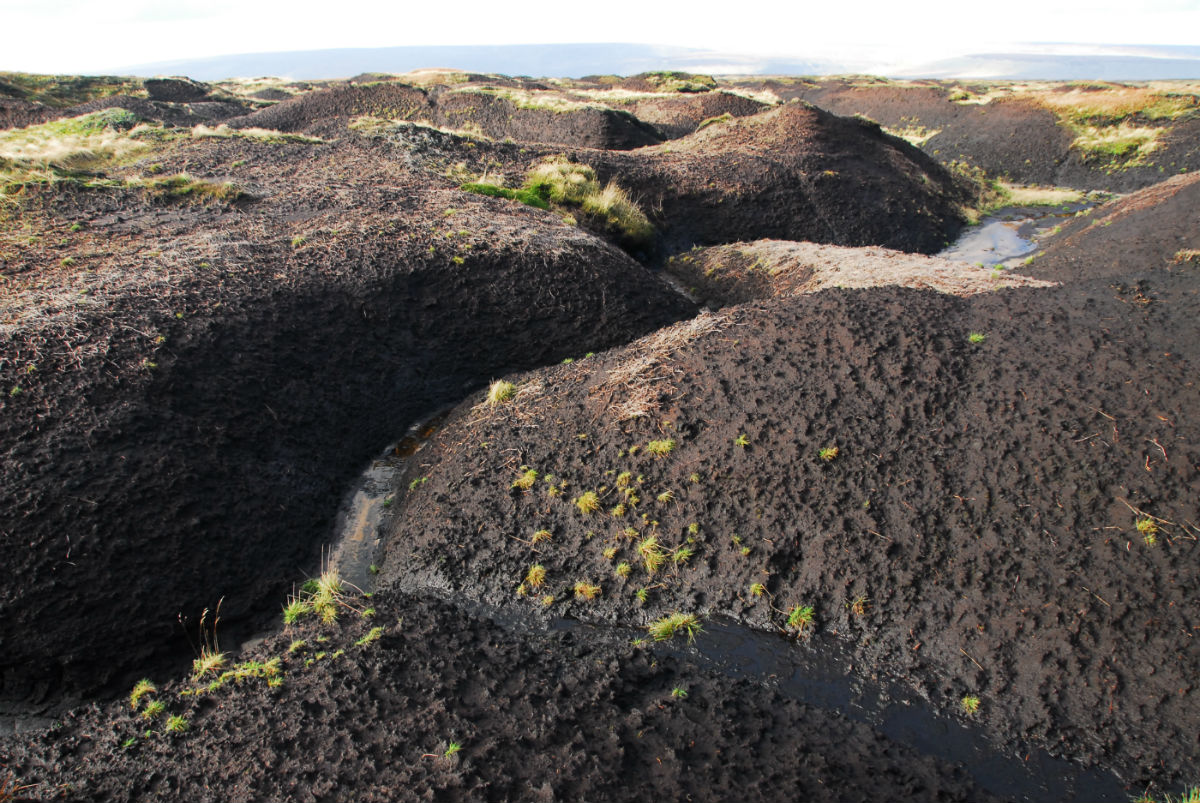 Image of bare peat with deep erosion gullies