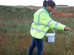 Leah Gooding from newsround spreading sphagnum on the moors