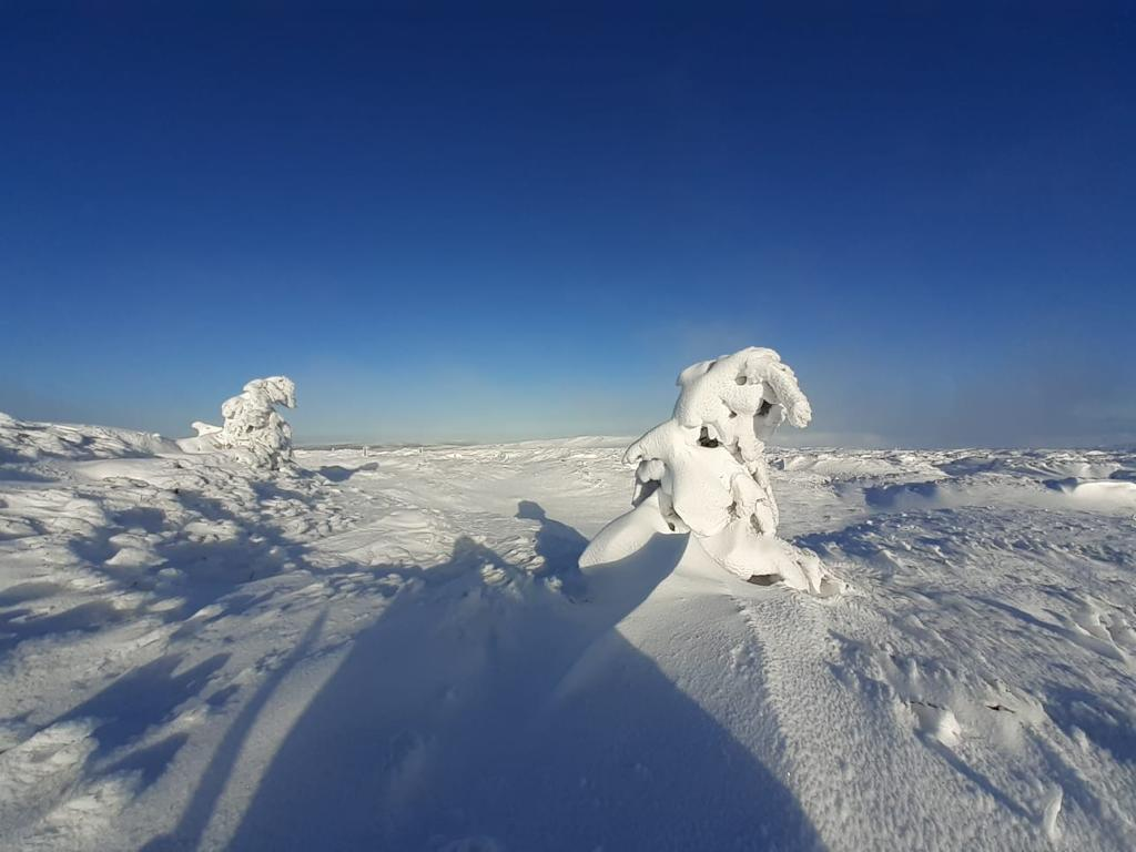 Snowy moorland conditions in 2021