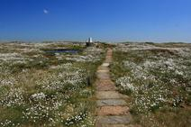 Image of Black Hill Cotton Grass