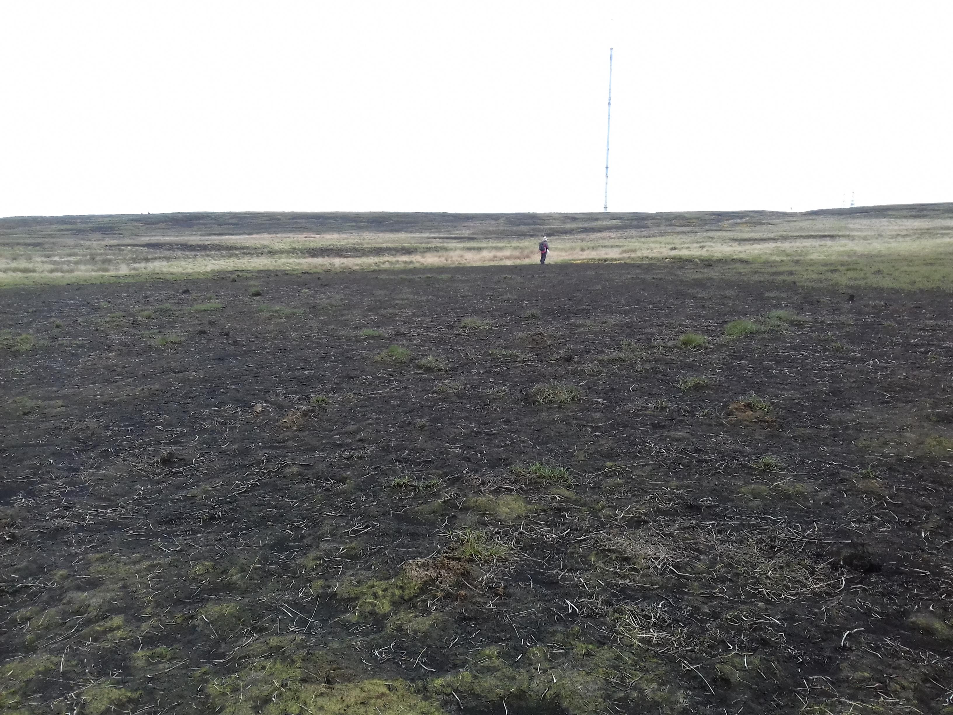 Winter Hill post-fire survey 2019