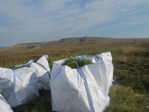 Bags of sphagnum at Bleaklow
