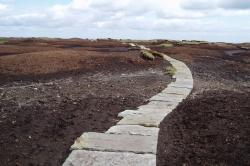 Black Hill in 2004