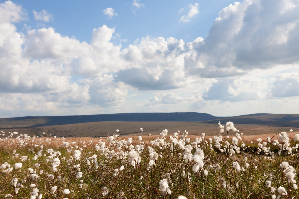 View with cotton grass
