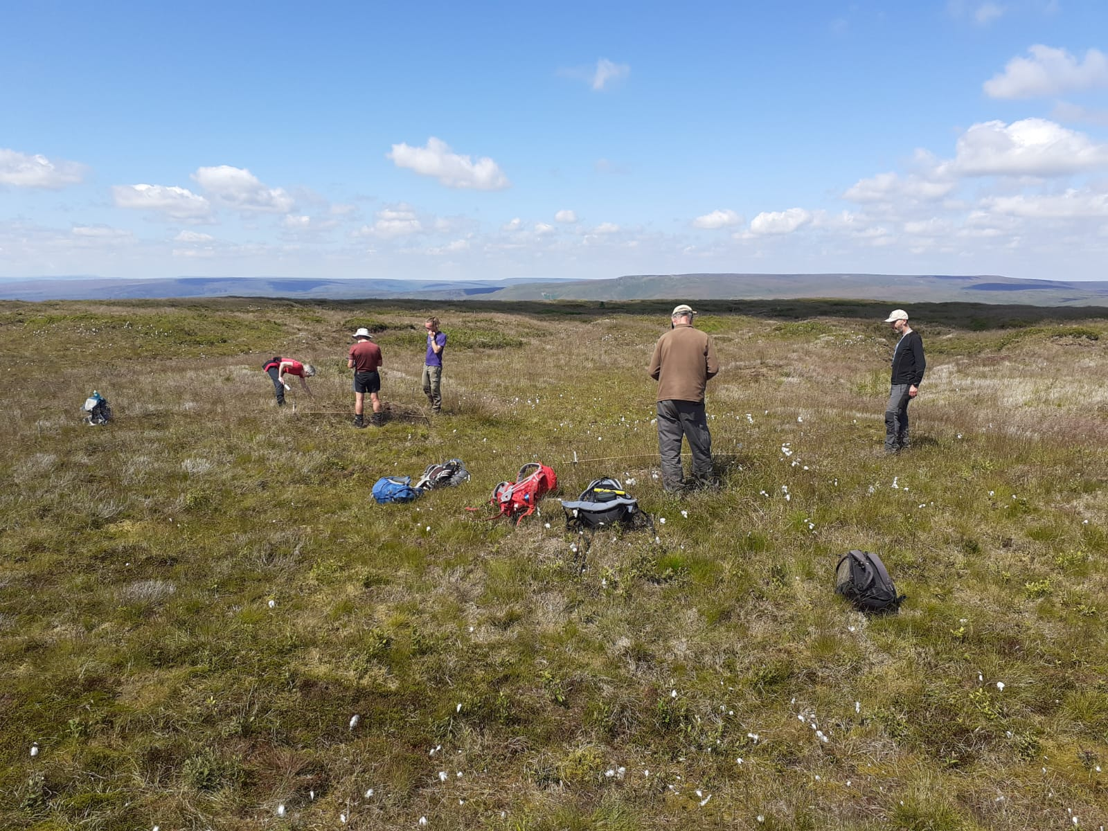 Vegetation monitoring 2021