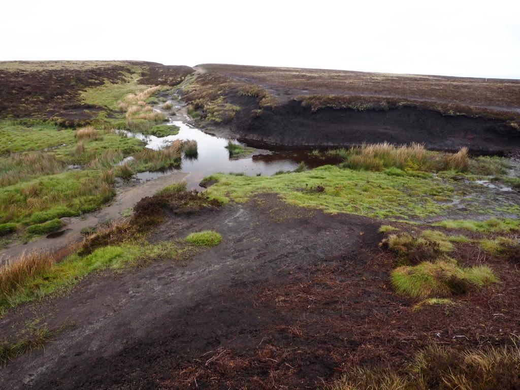 Cut Gate Bog of Doom