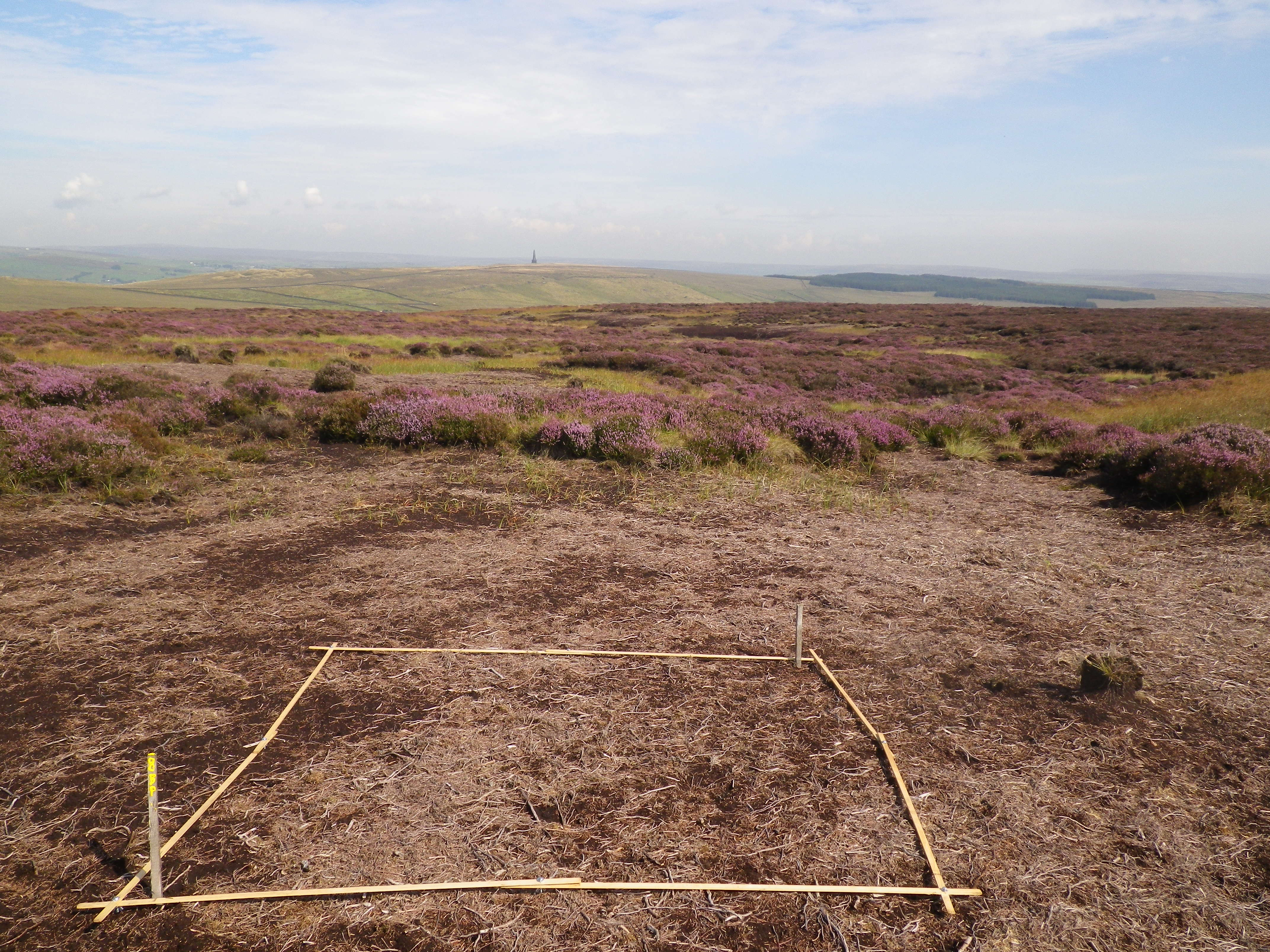 Vegetation Monitoring - growth of vegetation from treatment of bare peat