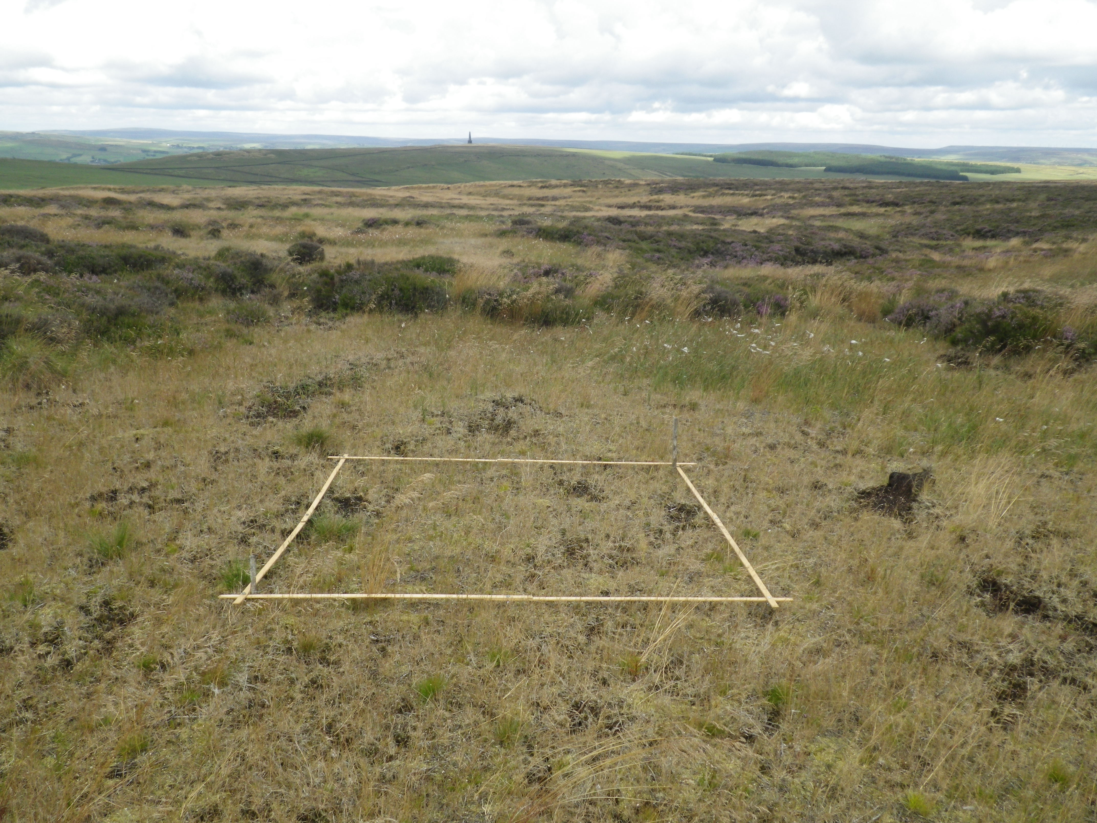3 Vegetation Monitoring - growth of vegetation from treatment of bare peat