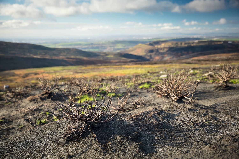 Fire damaged moorland