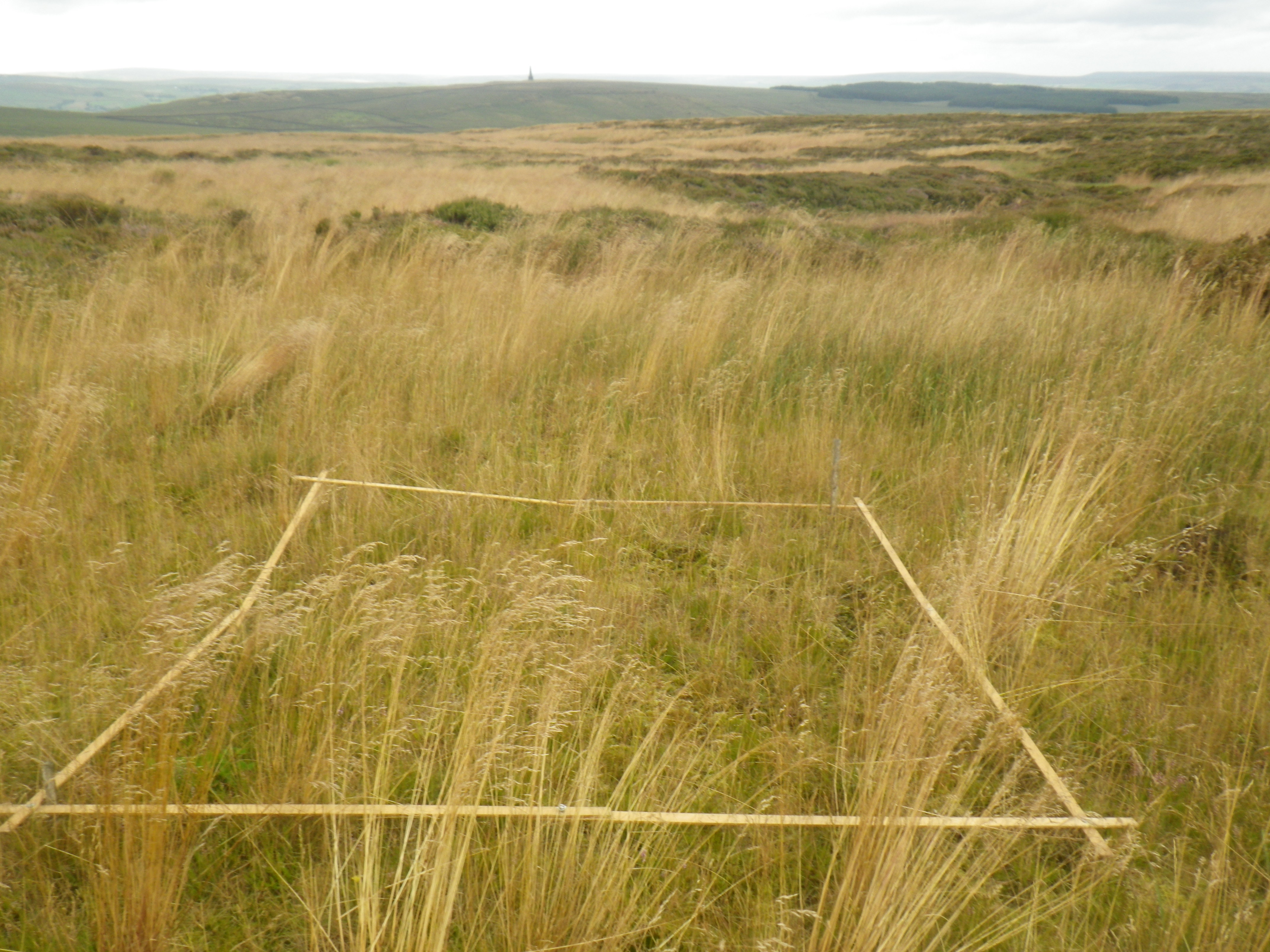 4 Vegetation Monitoring - regrowth of vegetation from treatment of bare peat