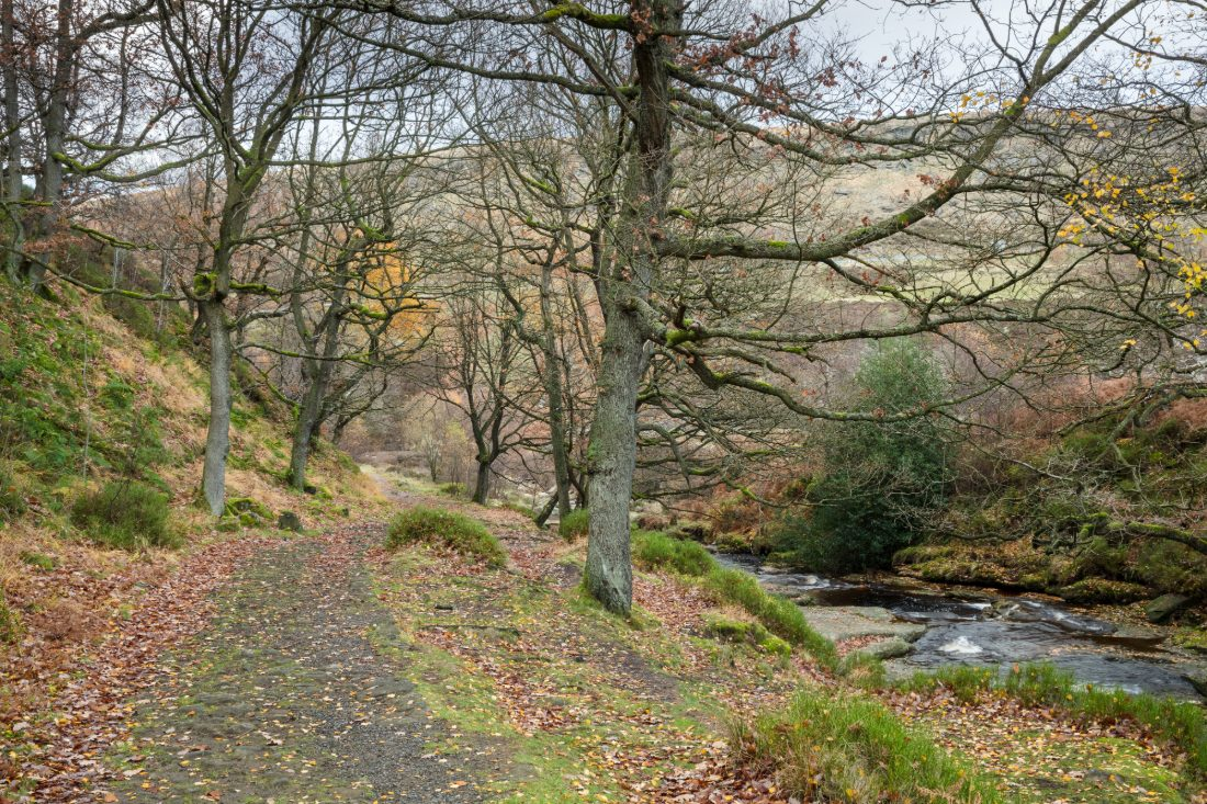 Clough woodland path next to stream