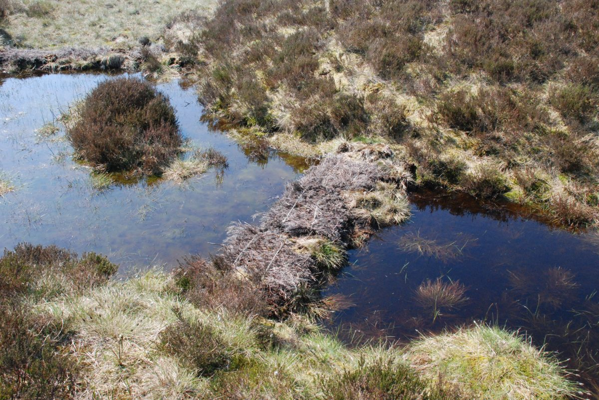 xMoorLIFE 2020: blocking drainage channels