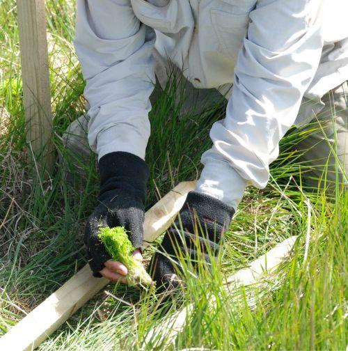 planting sphagnum