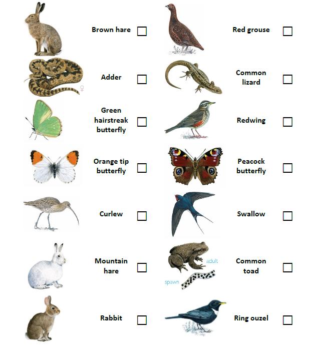 Moorland animals