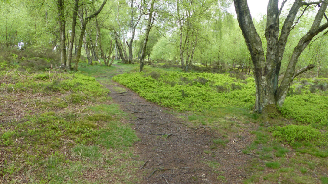 Path running through trees at Stanton Moor