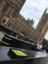 Sphagnum at the houses of Parliament